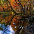写真: 水辺の紅葉その2