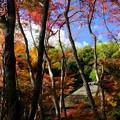 秋の祇王寺 その1