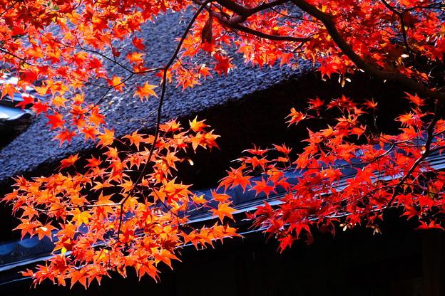 直指庵の秋 その2