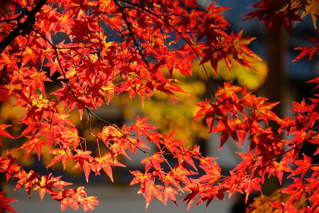 南禅寺にて 夕日を浴びる紅葉