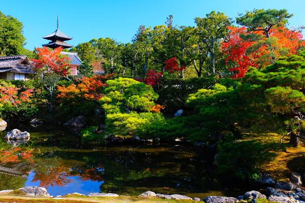 紅葉に染まる仁和寺北庭