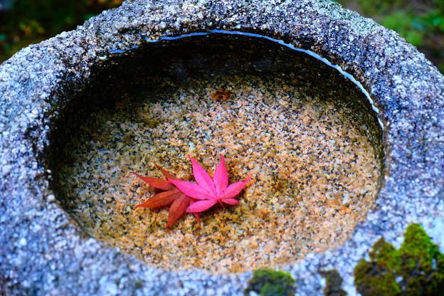 手水の中の秋