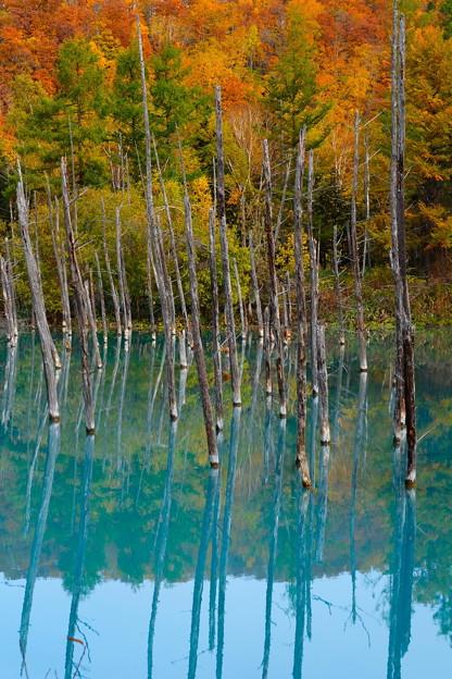 白金青い池 その1