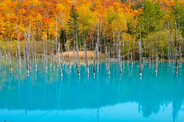 白金青い池 その2