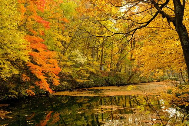 富良野鳥沼の秋 その1
