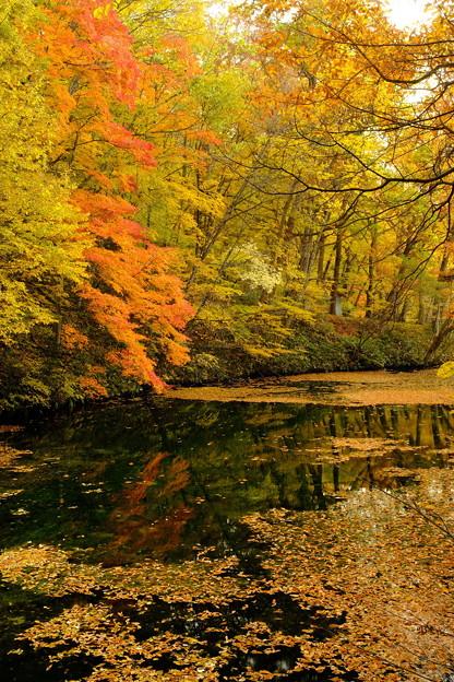 富良野鳥沼の秋 その2