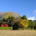 Photos: 秋の落柿舎