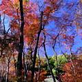 Photos: 錦秋の京都 祇王寺その3
