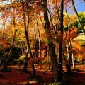 Photos: 錦秋の京都 祇王寺その4