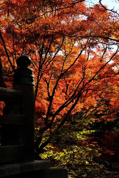 錦秋の京都 宝筐院その1