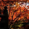 Photos: 錦秋の京都 宝筐院その1
