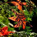 錦秋の京都 鹿王院の紅葉その3