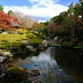 錦秋の京都 妙心寺退蔵院