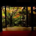 Photos: 錦秋の京都 妙心寺桂春院その2