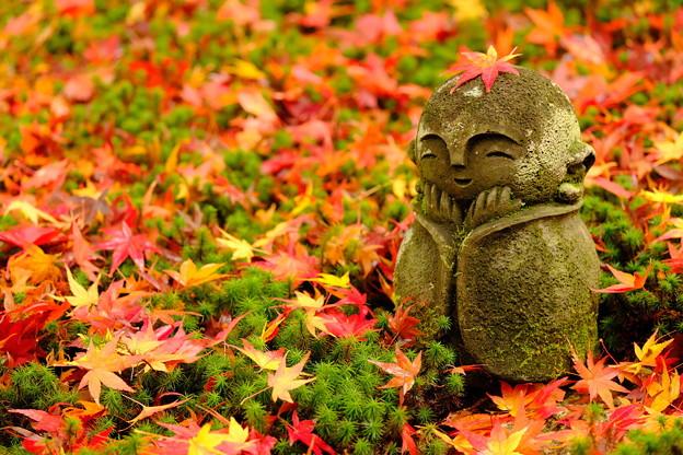 Photos: 錦秋の京都 圓光院その3