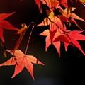 Photos: 錦秋の京都 真如堂本堂裏の紅葉