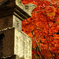 錦秋の京都 永観堂その1