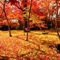 錦秋の京都 永観堂その2