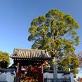 錦秋の京都 乙訓寺
