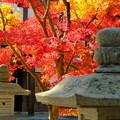 錦秋の京都 光明寺その2