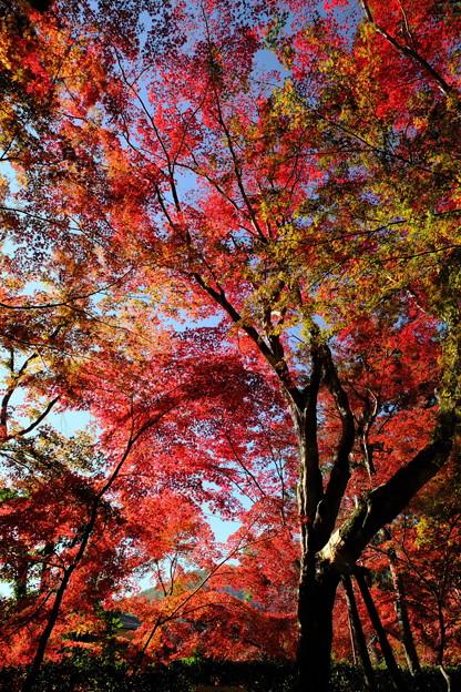錦秋の京都 光明寺その4