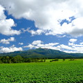 Photos: 大雪高原旭ヶ丘より大雪山を望む その2