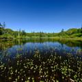 残暑の神仙沼 その1