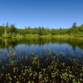 残暑の神仙沼 その2