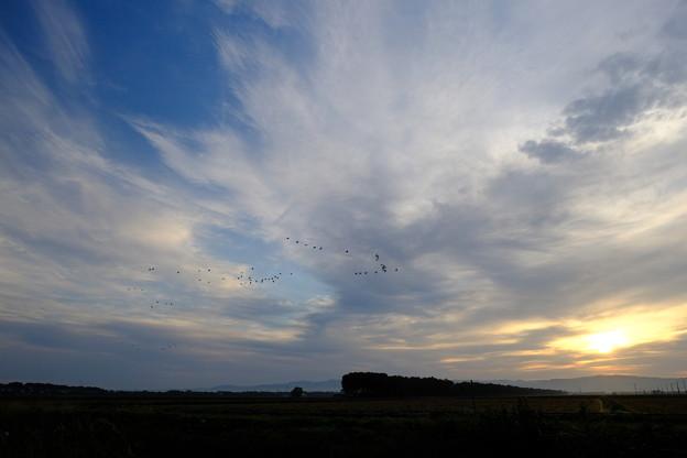 Photos: 日の出とともに旅立つマガン