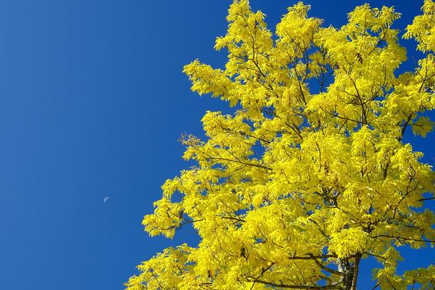 Photos: 昼の月と紅葉