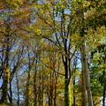 森のガーデンの色づき