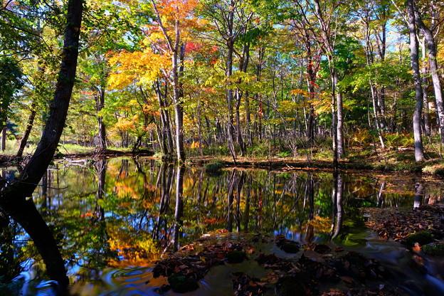 紅葉に染まる森 その1