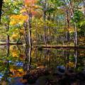 Photos: 紅葉に染まる森 その1