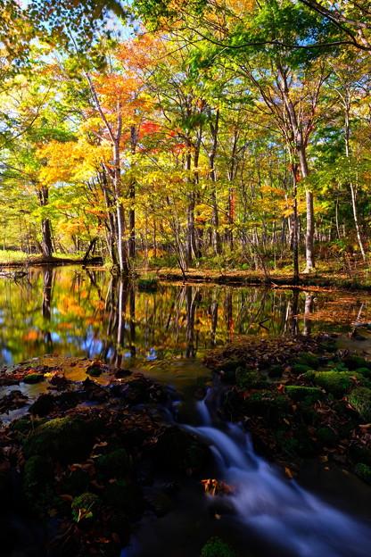 紅葉に染まる森 その2