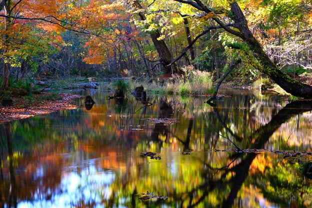 紅葉に染まる森 その3