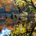 Photos: 紅葉に染まる森 その3