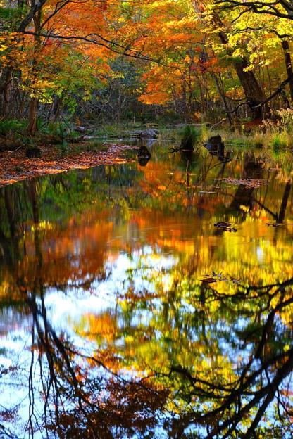 紅葉に染まる森 その4