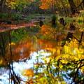 Photos: 紅葉に染まる森 その4