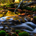 紅葉に染まる渓流 その1