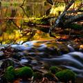 紅葉に染まる渓流 その2