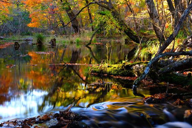 紅葉に染まる森 その5