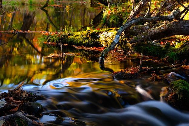 紅葉に染まる渓流 その3
