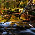 Photos: 紅葉に染まる渓流 その3