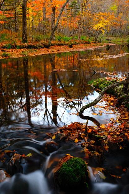 晩秋の渓流 その1