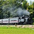 写真: 八木岡の稲穂と6001レSLもおか号