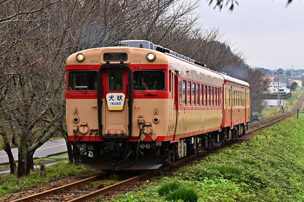 いすみ鉄道急行2号(キハ28+キハ52)