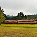 Photos: いすみ鉄道キハ28+キハ52普通列車104D