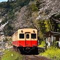 菜の花と桜と小湊鉄道