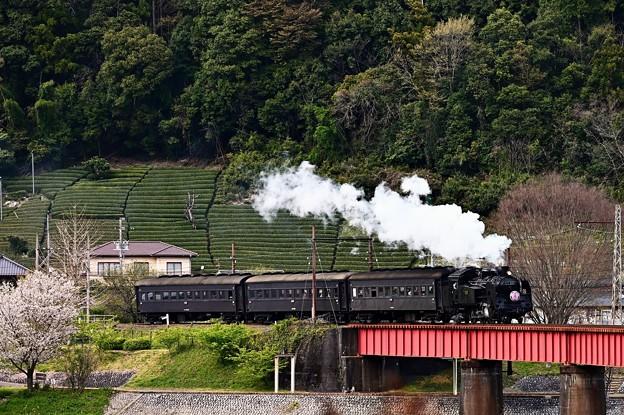 大井川第一橋梁を渡るC11 227さくらHM付