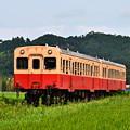 水田地帯を行く小湊鐵道キハ200